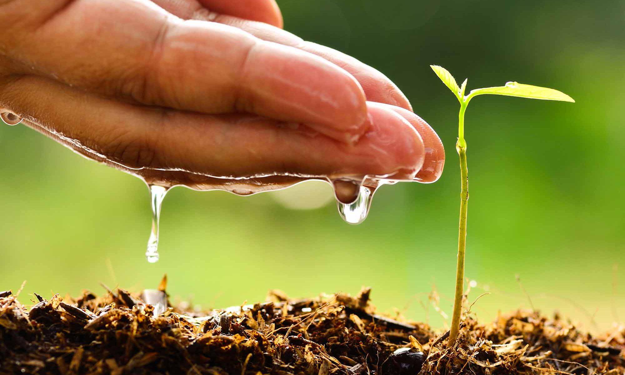 Cómo cuidar el medio ambiente.